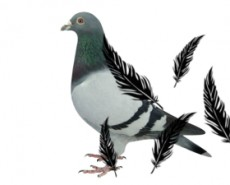 Logo pigeon_j